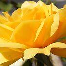 Bright Yellow by NancyC
