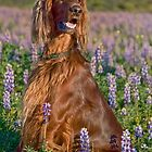 Phantom in the Lupine by Ann J. Sagel