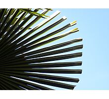 Alki Beach Palm Photographic Print