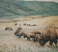 Buffalo on the plains by Dan Budde