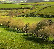 Tree-Lined Avenue by Nigel Finn