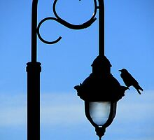 The Light of Day by pat gamwell