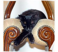 Relaxed Black Cat Sleeping Between Two Chairs Poster