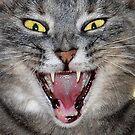 Scary Cat by Sheri Nye