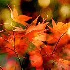 Autumn Glow by Natasha Bridges