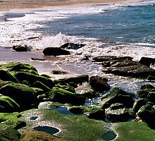 Bondi Beach by Kelley Shannon