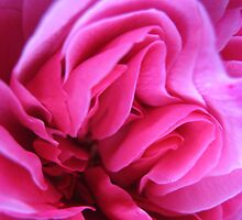 Sugar Pink Folds No.2 by Orla Cahill Photography