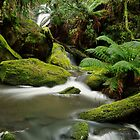 Yannathan Falls - Great Otways National Park by ShaneBooth