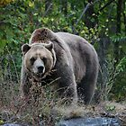 Grizzly by deb cole
