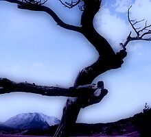 Infrared Burmis Tree  by Alyce Taylor