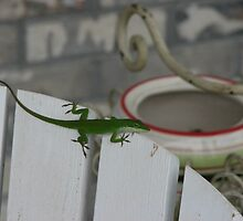 Anole Cute by JeffeeArt4u