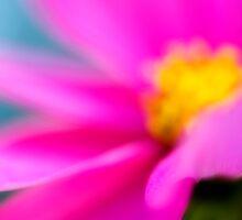 Pink by Silke Magino
