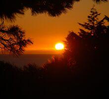 Sunset through the leaves by Joshdbaker