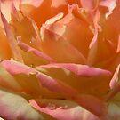 rose by Floralynne