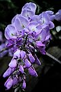 Painted Wisteria #2 by Evita