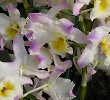 Orchid Chorus by MarianBendeth