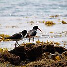 birds #18, their better be something under this seaweed by stickelsimages