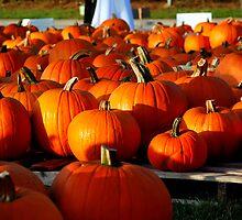 Pumpkin Patch by AngelPhotozzz