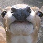 Deery Me! by Ladymoose