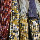 Indian Corn by jessiebea