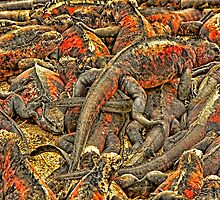 Iguanas by Morris Klein