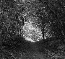 Tweed Woods by Ryan Davison Crisp