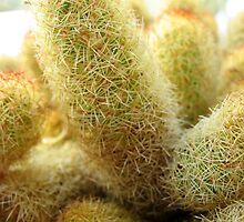 Hairy Cactus no.2 by Orla Cahill Photography