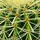 Prickly Cactus by Orla Cahill Photography