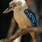 Blue Kookaburra by Stuart Robertson Reynolds