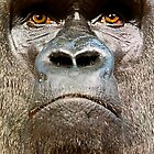 Portrait of a Silverback by Stuart Robertson Reynolds