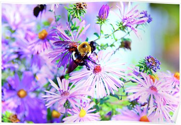 Bumble Bee Beautiful Flower by Jonathan  Green