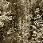Life and Death In The Forest--Sepia by Jess Mo