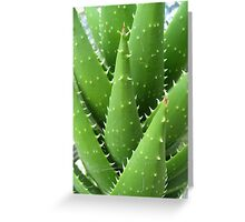 Toothed Cactus Greeting Card