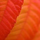 Sumac Leaf by Gina Ruttle  (Whalegeek)