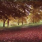 autumn day in beechwood park by Ann Persse