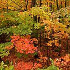 Maple Heaven by Gina Ruttle  (Whalegeek)
