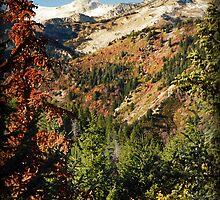 Lone Peak Wilderness Area from Alpine Loop by Ryan Houston