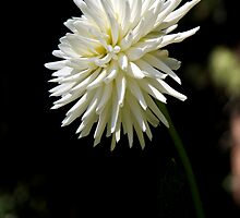 Bloomin' Lovely by Patty Boyte