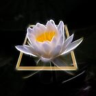 Lotus in 3D by carlosramos