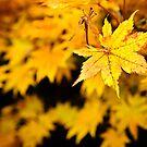 Autumn II by trbrg