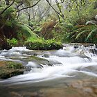 Leura Cascades (best viewed large) by Son Truong
