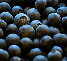 Blueberries by Tiffany Dryburgh