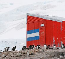 Gentoo colony at abandoned Argentine station by parischris