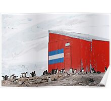 Gentoo colony at abandoned Argentine station Poster