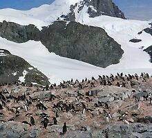 Gentoo colony by parischris