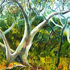 SCRIBBLY GUMS, DURAL, N.S.W. by HAMISH CUMING