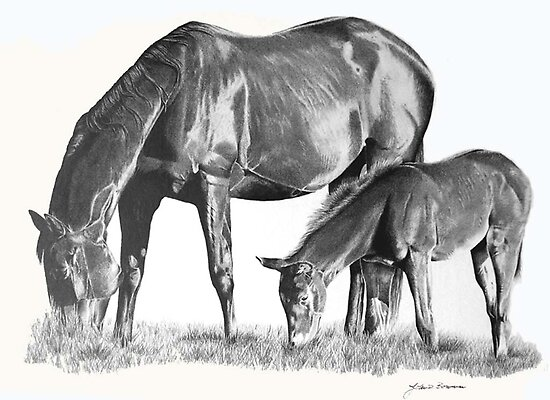 Mare and Colt by J.D. Bowman