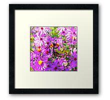 Bumble Bee Bopp Flower Colour Framed Print