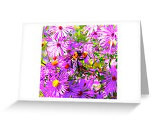 Bumble Bee Bopp Flower Colour Greeting Card