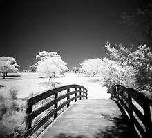 The bridge by Roberts Birze